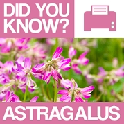 Astragalus : Did You Know? Poster