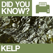 Kelp : Did You Know? Poster